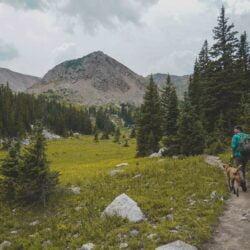 8 Consigli: fare trekking con il CaneAttrezzatura Trekking