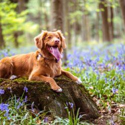 Attrezzatura Trekking per il cane: l'elenco completoAttrezzatura Trekking