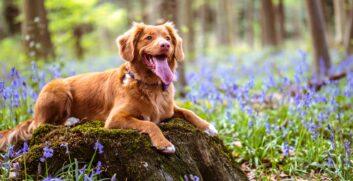 Attrezzatura Trekking per il cane: l'elenco completoAttrezzaturaTrekking.it