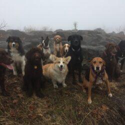 Dog hiking! Servizio per cani di New YorkAttrezzatura Trekking